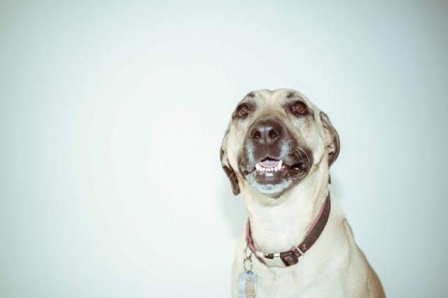 Giv din hund et flot og fint halsbånd